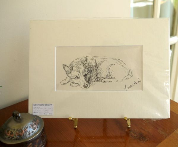 Welsh Corgi - Cor D3 -  lying down  1930's print by Lucy Dawson